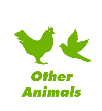 other animals