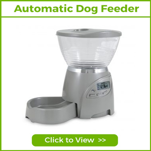 automatic feeders and waterers for dogs