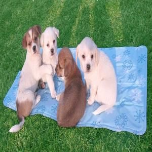 Chillr PCM Pet Cooling Mat Large