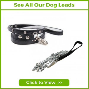 SEE ALL OUR DOG LEADS