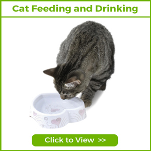 cat feeding and drinking