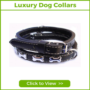 LUXURY & DESIGNER DOG COLLARS