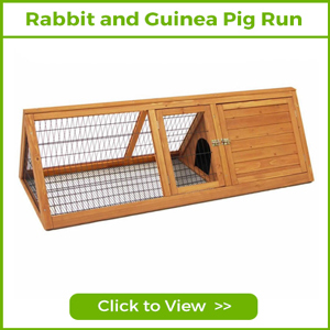 rabbit and guinea Pig Runs