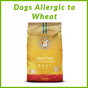 DOGS ALLERGIC TO WHEAT