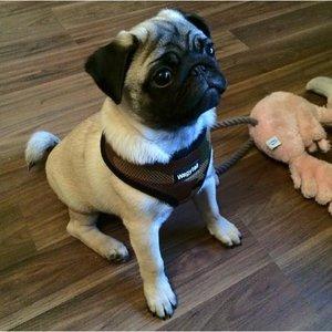 ARMY CAMO DOG HARNESS