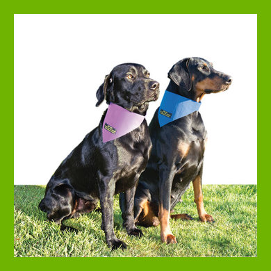 KEEP COOL DOG BANDANAS