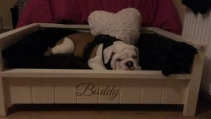 HANDMADE PET BEDS