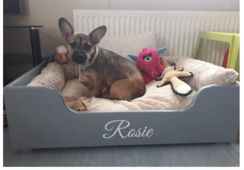 LUXURY X LARGE CLASSIC PET BED WITH FREE BEDDING